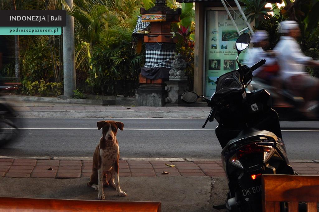 PSY Indonezja Bali 1