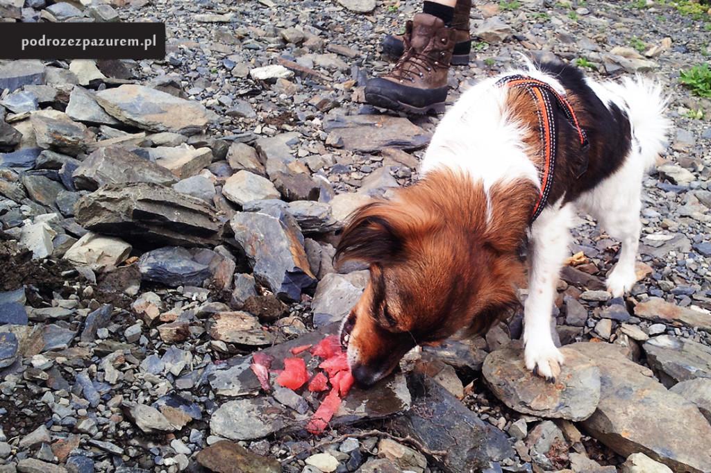 Zadbaj o jedzenie, inaczej Twój pies może skończyć na wcinaniu arbuza.