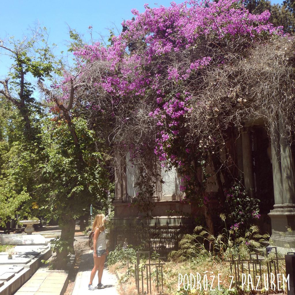 cmentarz-santiago